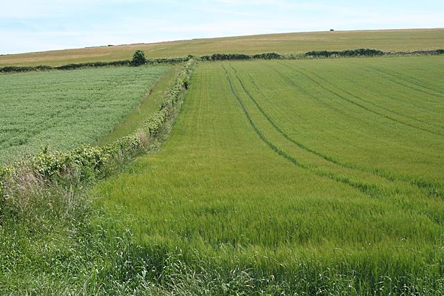 Chivelstone: farmland