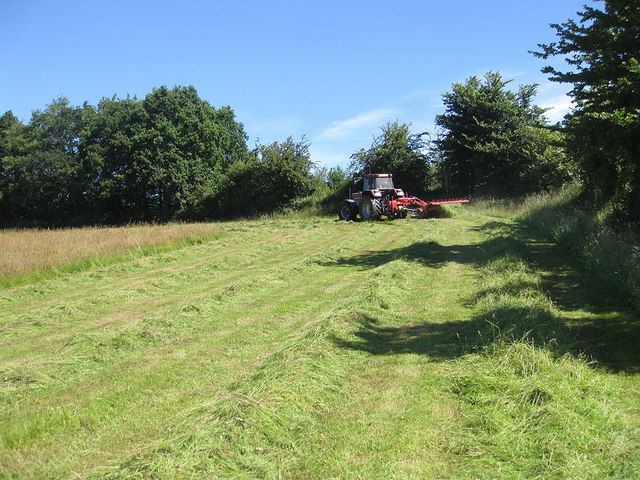 Making hay in the sunshine