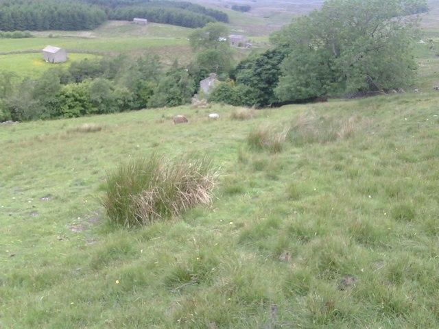 View over Aldershaw