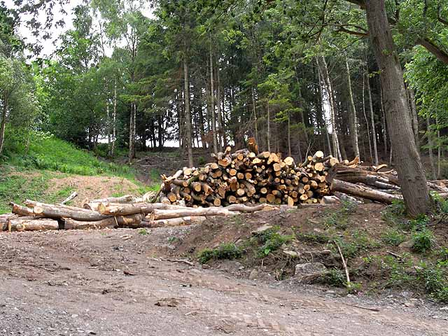 Log pile in Old Park Bottom Wood