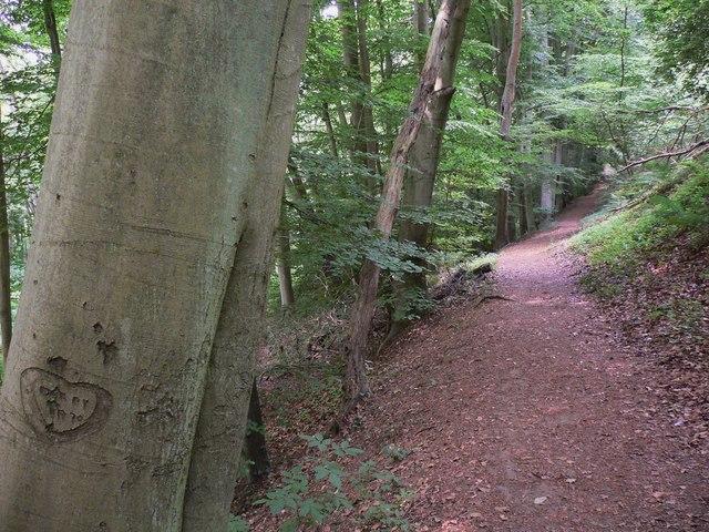 Woodland walk with a heartfelt memory