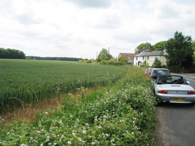 Crops adjacent Pound Lane