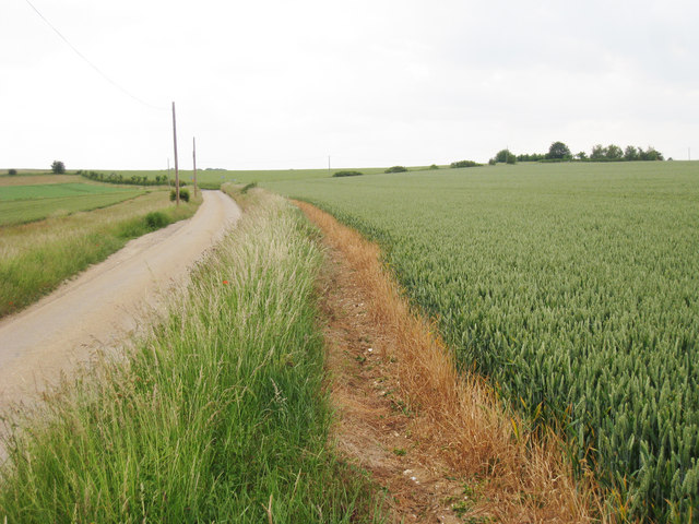 Crop Field along Bramling Road