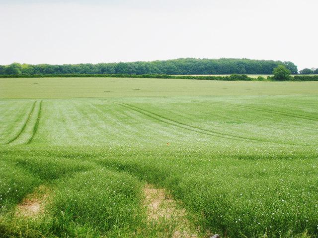 Crop Field off Bramling Road