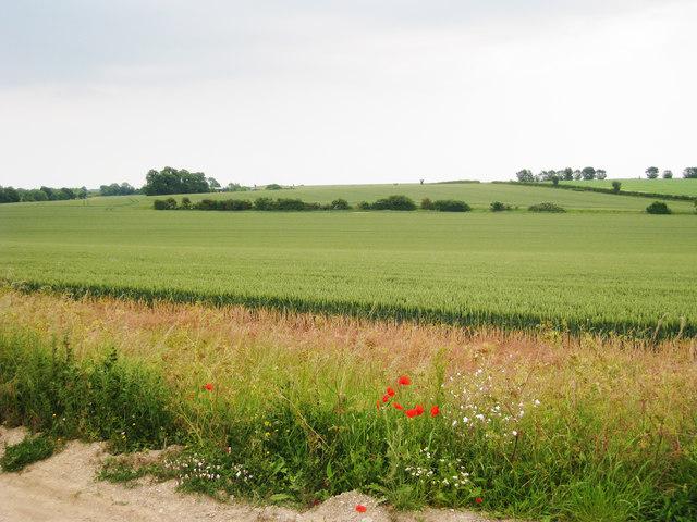 Wheat Field off Bramling Road