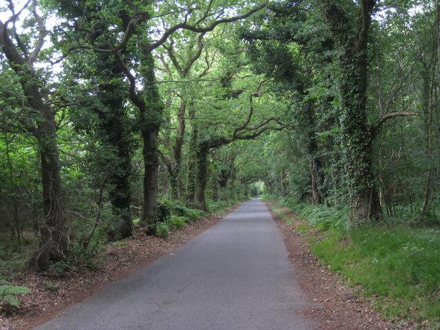 Swanton Lane