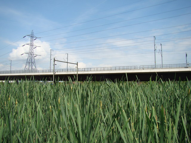c2c and CTRL gantries and wires viewed through the long grass