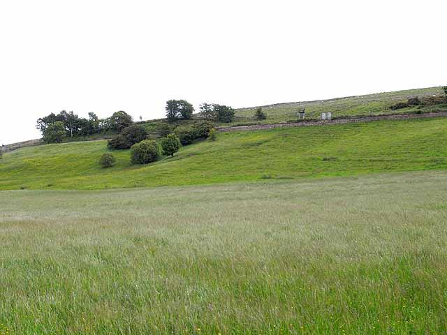 Meadow near Chapelburn