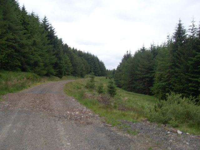Forestry track in Carsphairn Forest