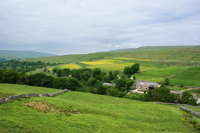 Buttercups on the limestone levels