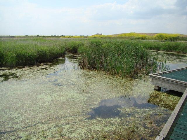 Pond and target range