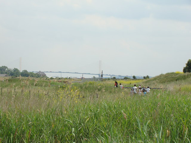 QEII Bridge, viewed from Rainham Marshes Nature Reserve