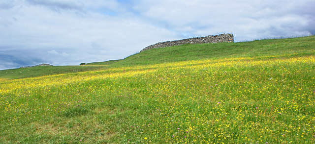 Buttercups carpet the hillside and the windbreak is unneeded today
