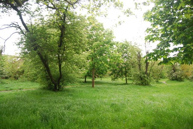 Trees, Wandsworth Common