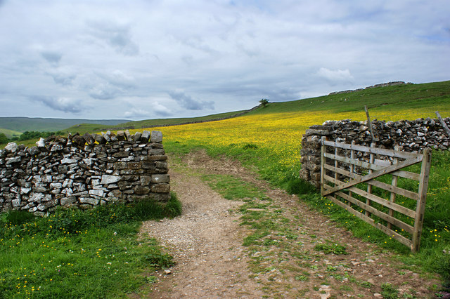 An open gate and more buttercups