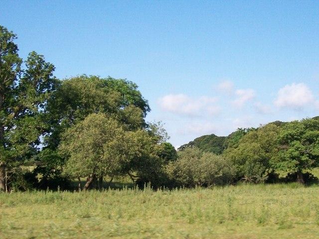 Woodland and rough grassland near Pont Penmaen