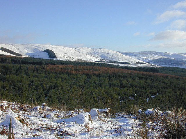 The Myherin Forest in winter