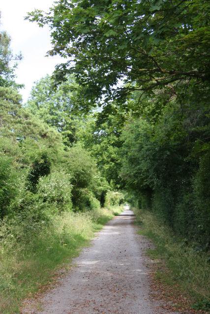Icknield Way near Newmarket