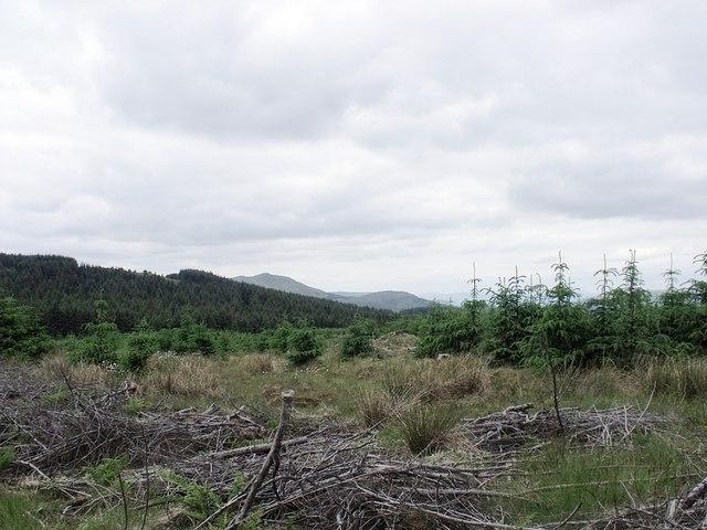 Plantation debris