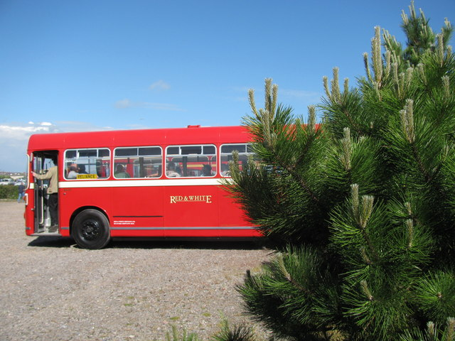 Bus and Fir Tree