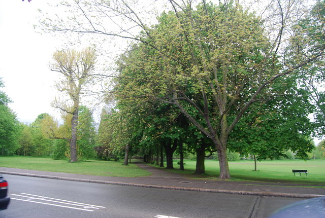 Chestnut trees, Wandsworth Common