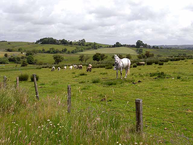 Horse and sheep at Batey Shield