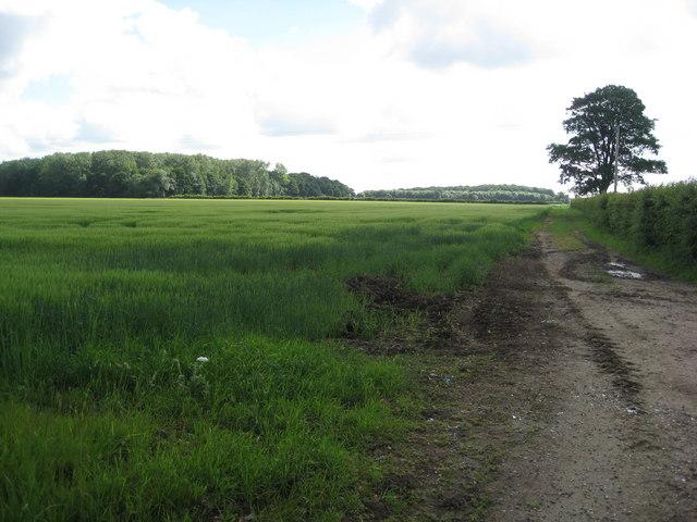 Revesby - Farmland
