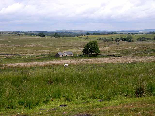 Cottage near Halton Lea Gate
