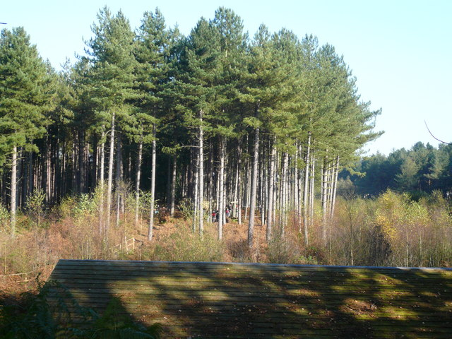 Woodland - Linmere Moss