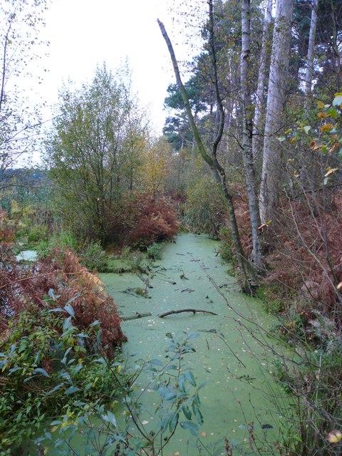 Edge of Blakemere Moss