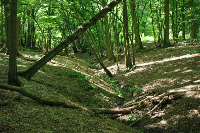 Dry stream, Ricketts Wood