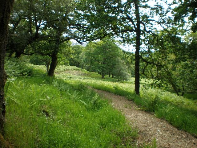 Woodland path near Brenachoile Lodge
