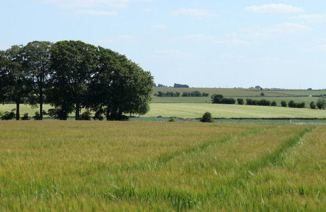 2010 : Barley field on the footpath to West Littleton