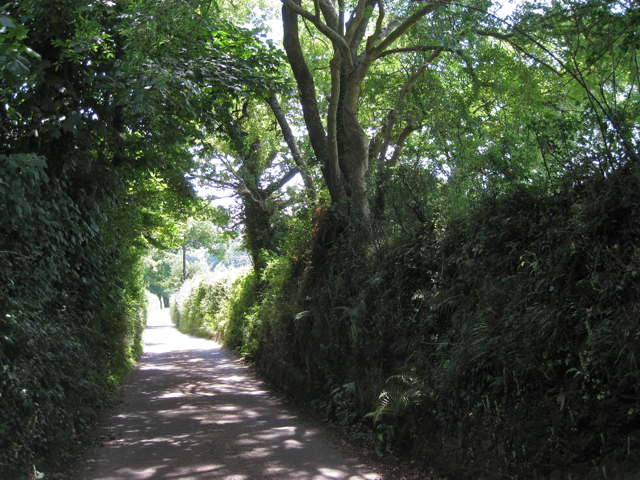Lane down to Orlycombe Cross