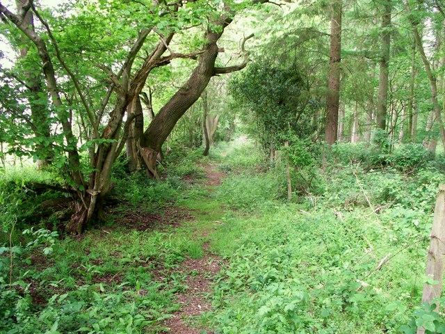 Herbert's Heath woodland