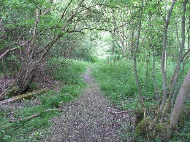 Starveall Wood