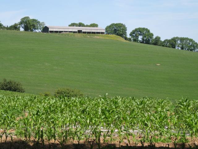 New barn northeast of Coombe Cross