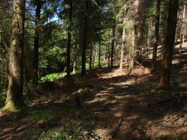 Pullbrook Wood