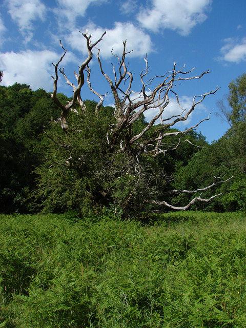 Hisley Wood