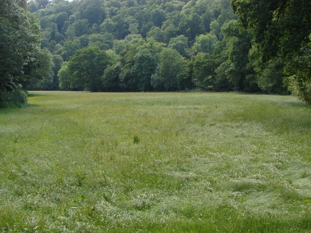 Field near Lustleigh