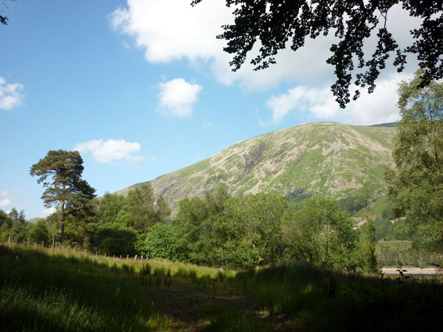 In the Thirlmere forest