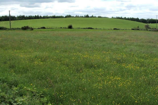 Field beside Drove Loan