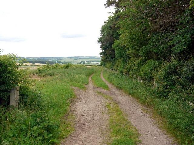 The north edge of Blinkbonny Strip