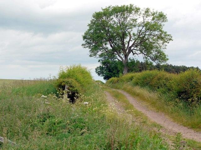 Track north of Blinkbonny