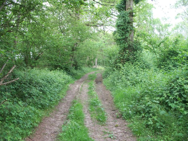 In Bould Wood