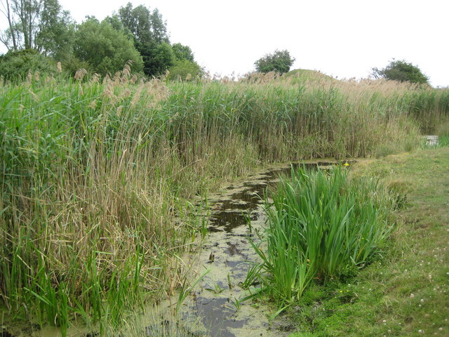 Staines Moor: Butts Pond and reed bed