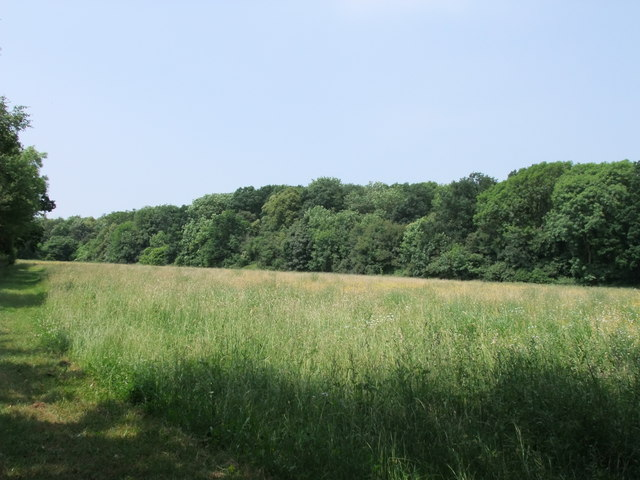 Footpath next to Mosse's Wood