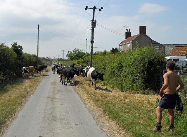 West Hann Lane near Roe's Farm