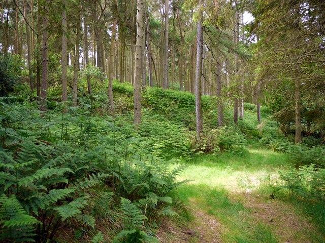 Floddenhill Plantation
