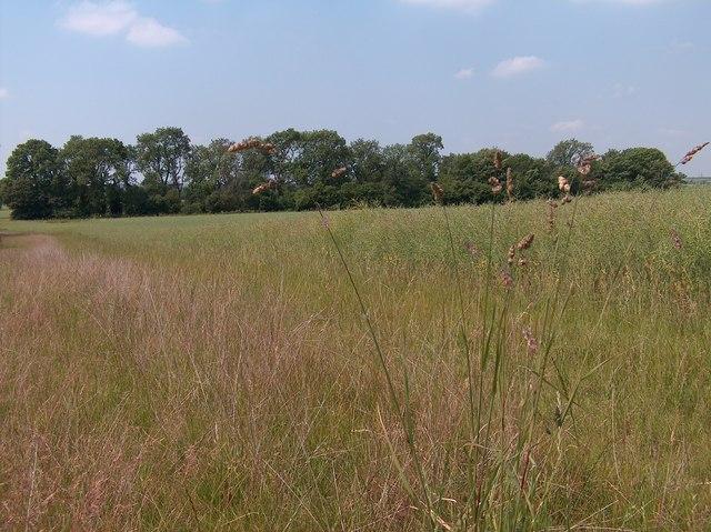 Grendon Plantation south east of Little Wharton